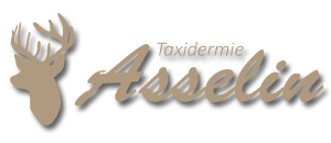 Taxidermie Asselin