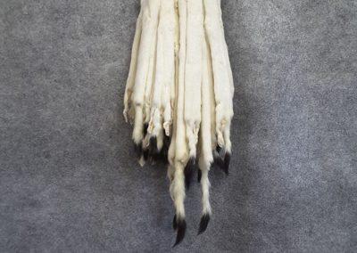fourrure tanné blanche (Tanneur à Québec) - Taxidermie Asselin Québec