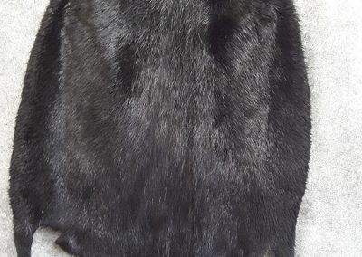 grande Peau ours (Tanneur à Québec) - Taxidermie Asselin Québec